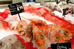черный рот рыб Стоковое Фото