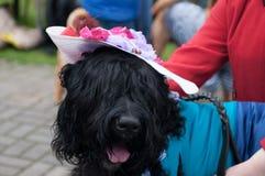 черный русский terrier Стоковая Фотография RF