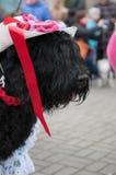 черный русский terrier Стоковые Фотографии RF