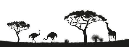 Черный силуэт страуса, жирафа в саванне животные Африки африканский ландшафт Панорама одичалой природы иллюстрация штока