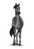 Черный символ вектора дикой лошади или рысака Стоковая Фотография