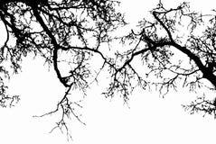 Черный силуэт ветвей дерева, вектор стоковое фото