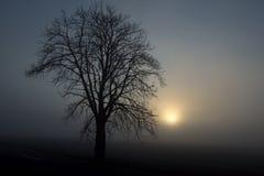 Черный силуэт дерева в тумане Стоковые Фотографии RF