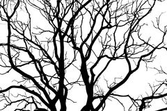 Черный силуэт дерева Стоковая Фотография RF