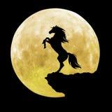 черный силуэт лошади Стоковая Фотография