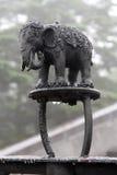 Черный слон Стоковые Изображения RF