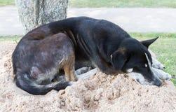 Черный сон бездомной собаки на песке Стоковое фото RF
