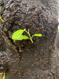 Черный ствол дерева и зеленая предпосылка разрешения стоковые изображения rf