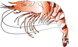 черный тигр креветки Стоковое Изображение