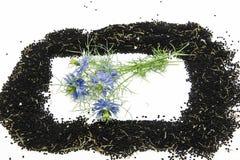 черный тимон стоковое изображение