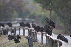 черный хищник Стоковое Фото