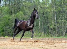 черный ход лошади стоковое изображение rf