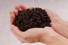 Черный чай в руках, пригорошня лист высушенного чая стоковая фотография rf