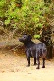 Черный щенок в парке осени Стоковая Фотография RF
