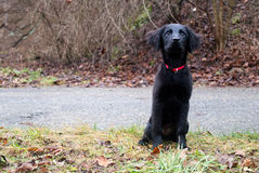 Черный щенок Стоковые Изображения RF