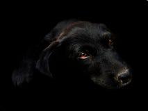 Черный щенок стоковая фотография