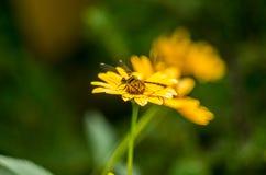 Черный dragonfly Стоковая Фотография