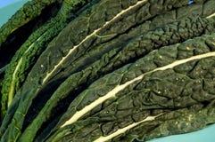 черный kale Стоковые Изображения