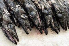 Черный scabbardfish на рынке Фуншала, Мадейре Стоковое Изображение RF