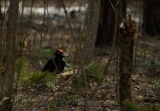 Черный woodpecker на дереве стоковая фотография