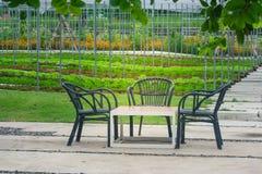 3 черных деревянных стула и одна сервировка стола на конкретном поле на красивом открытом саде Стоковые Фотографии RF