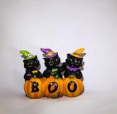3 черных кота на хеллоуине Стоковые Изображения