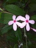Чернь цветков захватила стоковые фотографии rf