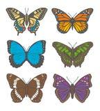 """Чертежи иллюстрации вектора различных бабочек, включая """"белый адмирала """", """"Старый Мир Swallowtail """", """"бабочка монарха """", иллюстрация штока"""