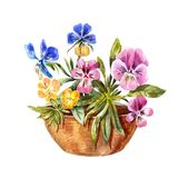 Чертеж акварели flowerbed Милое фиолетовое, голубое, желтое pansi Стоковая Фотография RF