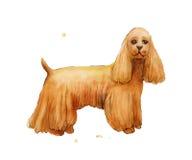 Чертеж акварели Spaniel Cokcer Собака Брайна милая Стоковая Фотография RF