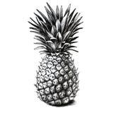 Чертеж ананаса Стоковое Фото