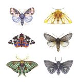 Чертеж бабочек shaggy, комплект бабочек, ковш рыжеватый, желтый медведь акварели, глаз Artemis павлина, красивые крыла Стоковое Изображение RF