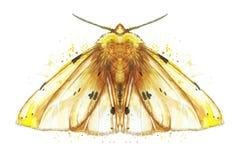 Чертеж бабочки ночи насекомого, сумеречница акварели, желтый медведь, красивые крыла, shaggy, животные, печать, оформление, дизай Стоковые Фотографии RF