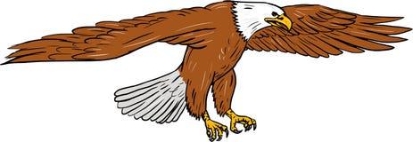 Чертеж белоголового орлана Swooping Стоковое Изображение RF
