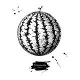 Чертеж вектора арбуза ягода нарисованная рукой на белой предпосылке иллюстрация вектора