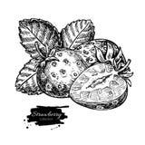 Чертеж вектора клубники Изолированная ягода нарисованная рукой, кусок Стоковые Фотографии RF