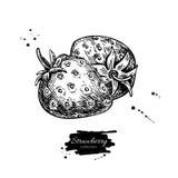 Чертеж вектора клубники Изолированная ягода нарисованная рукой на белизне Стоковая Фотография