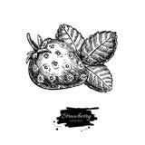 Чертеж вектора клубники Изолированные ягода и лист нарисованные рукой дальше Стоковое Изображение RF