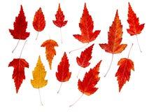 Чертеж высушенных листьев падения изолированных заводов Стоковое фото RF