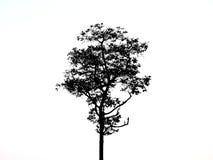 Чертеж дерева черный Стоковые Фотографии RF