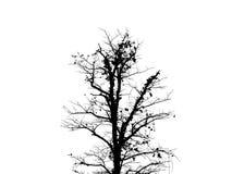 Чертеж дерева черный Стоковые Фото