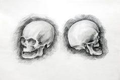 Чертеж исследования черепа бумажный карандаш стоковые изображения rf