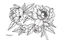 Чертеж и эскиз цветка пиона иллюстрация штока