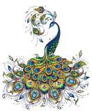 Чертеж павлина фантазии на белой предпосылке Стоковая Фотография RF
