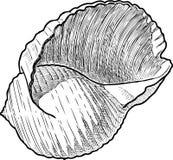 Чертеж руки seashell иллюстрация штока