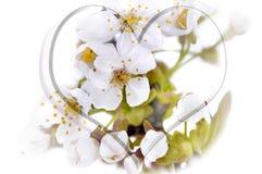 Чертеж сердца на цветках весеннего времени Стоковая Фотография RF