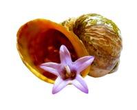 Чертеж фиолетового колокола цветка в старом клочковатом seashell Стоковая Фотография RF