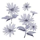 Чертеж цветет нарисованные вручную стоцветы, маргаритки Stylization акварели, Monochrome серый цветок Стоковая Фотография RF