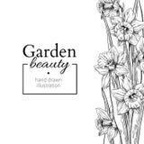 Чертеж цветка Daffodil и границы листьев Рамка вектора нарисованная рукой выгравированная флористическая иллюстрация вектора