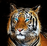 Чертеж цифров тигра Стоковое Изображение